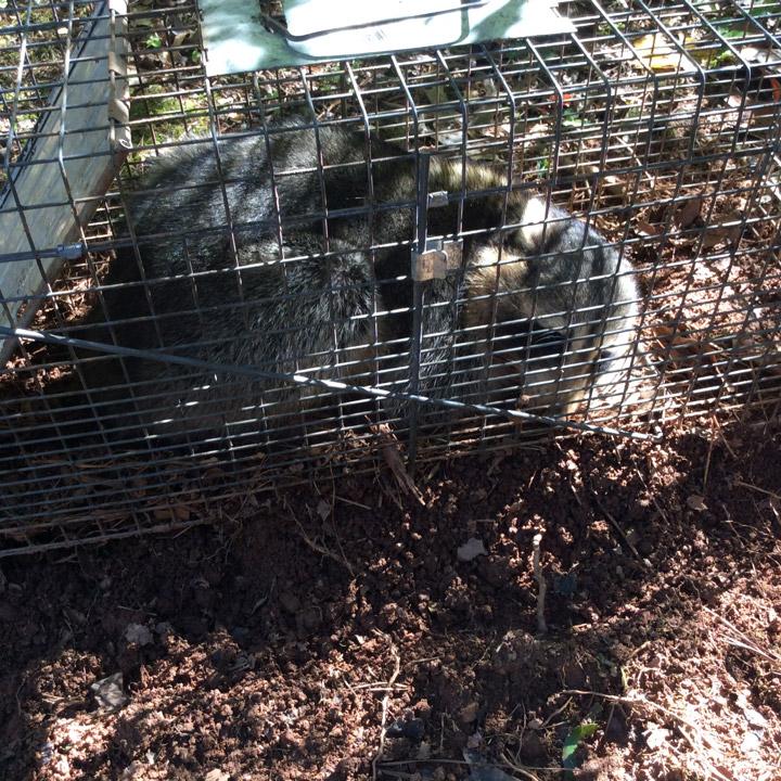 Wildlife Removal Service